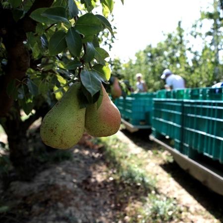 Frutta estiva, Conserve Italia lavorerà oltre 65mila tonnellate